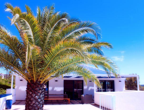 Mood_Pergola_Terrace_Palmtree